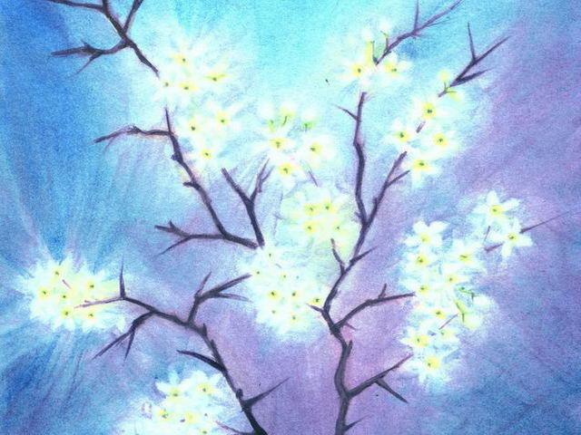 057: Schlehenblüten
