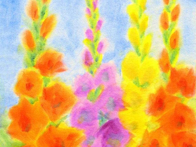 108: Gladiolen