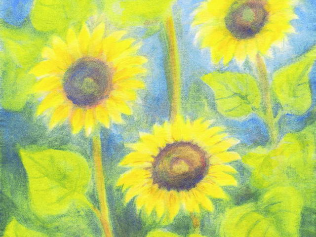 123: Drei Sonnenblumen