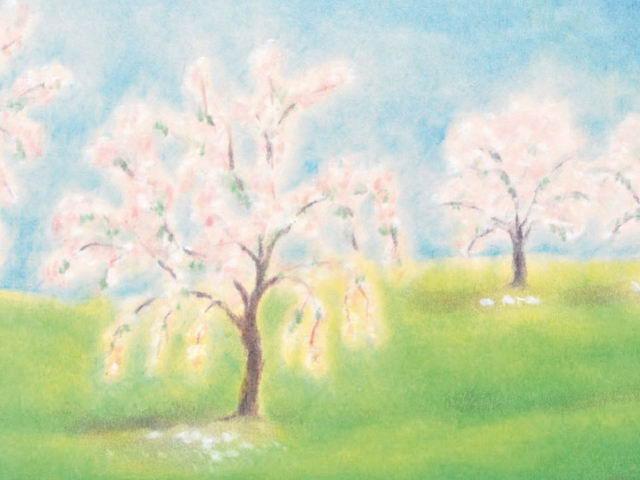 146: Blühende Obstbäume