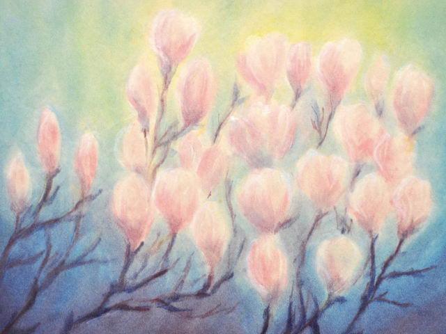 162: Blühende Magnolien
