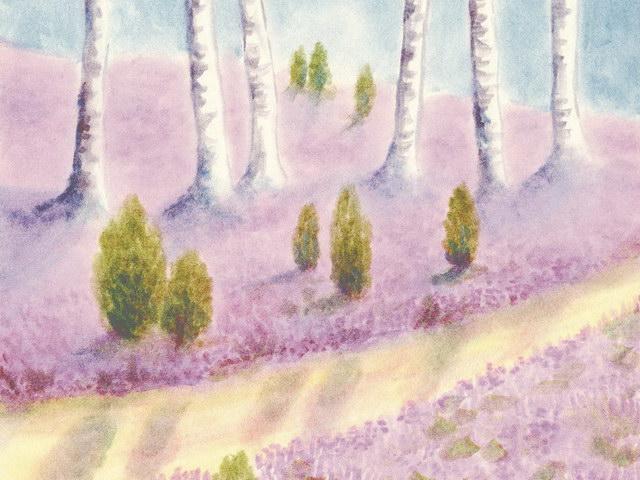 171: Birken in der Heide
