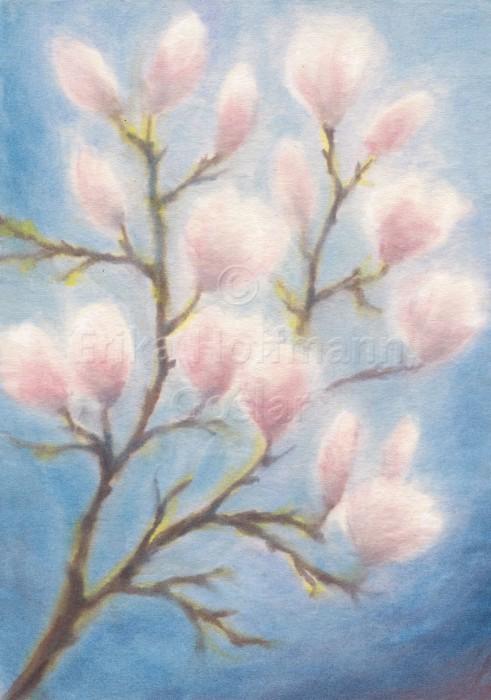 054_Magnolien rosa-blau