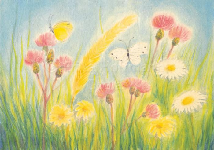 072_Klee, Margerit, Schmetterl