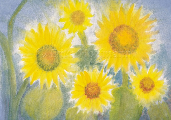 077_Sonnenblumen