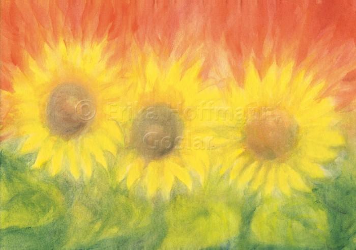 078_Drei Sonnenblumen