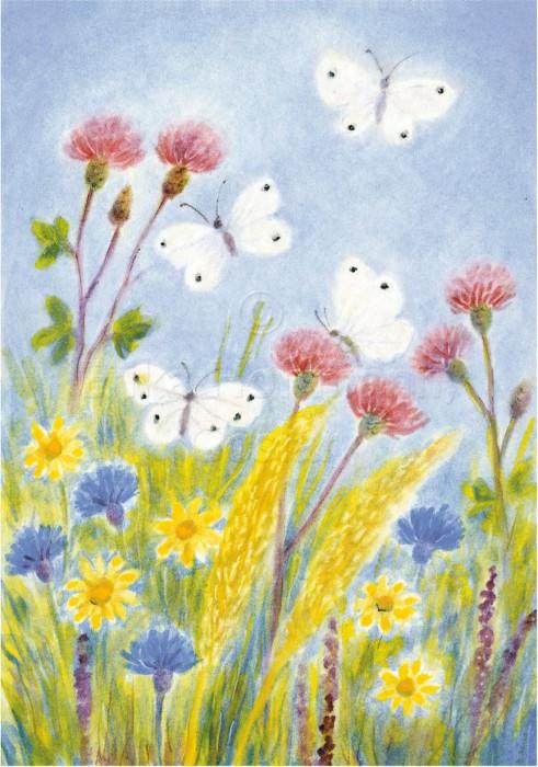 103_Wiese, Schmetterlinge