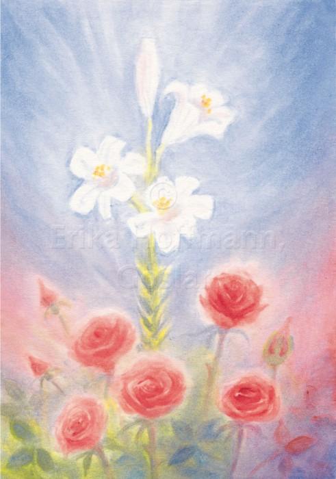 105_Rose und Lilie
