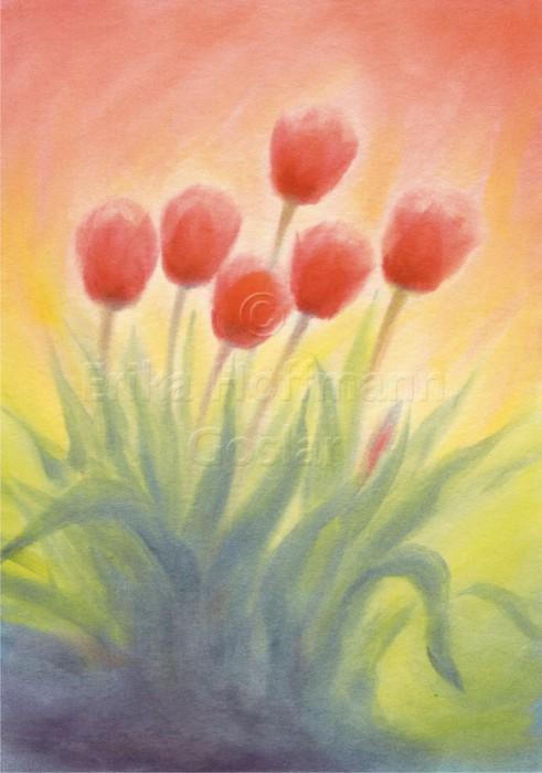 109_Tulpen