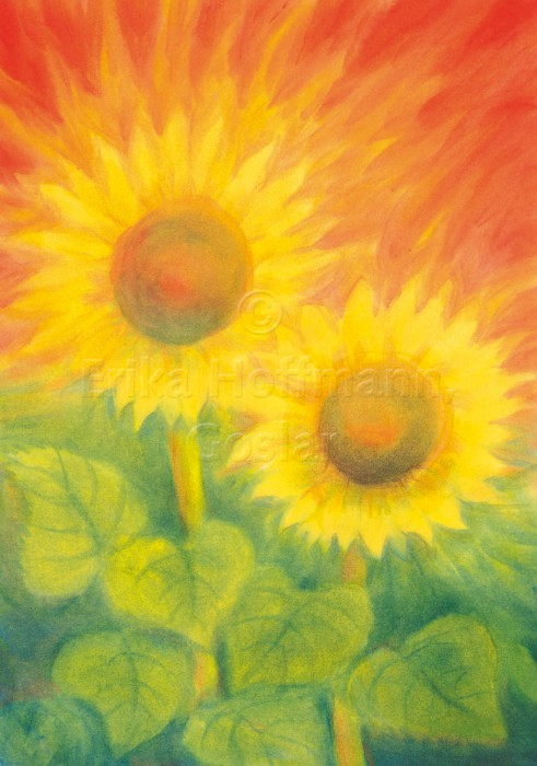 122_Zwei Sonnenblumen