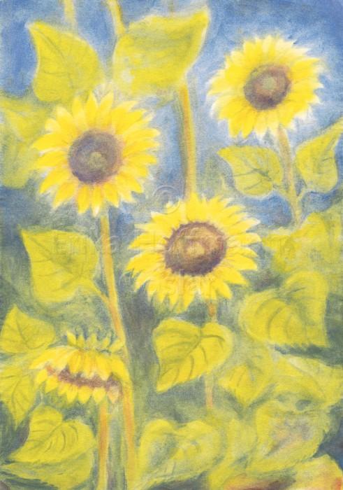 123_Drei Sonnenblumen