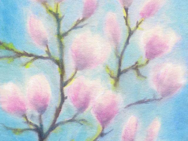 054: Magnolien rosa-blau