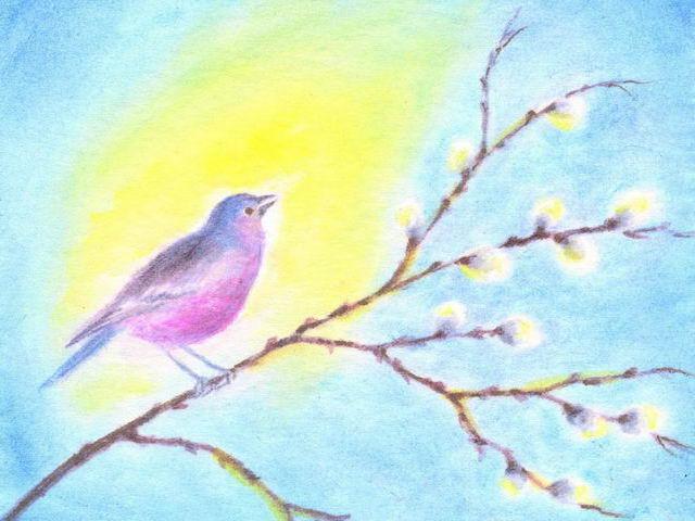 066: Vogel auf Kätzchenzweig