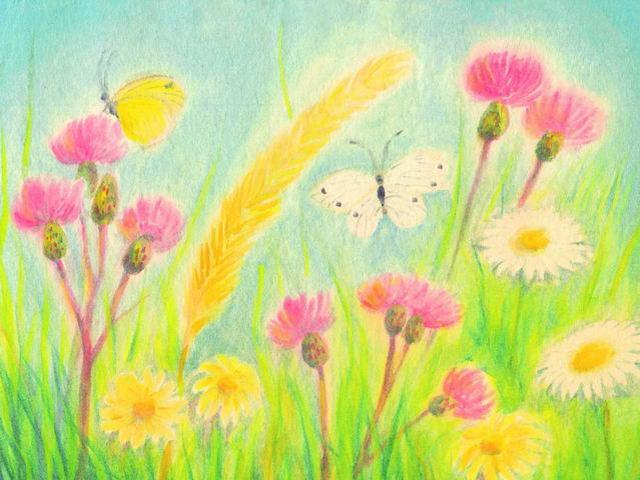 072: Klee, Margeriten, Schmetterlinge