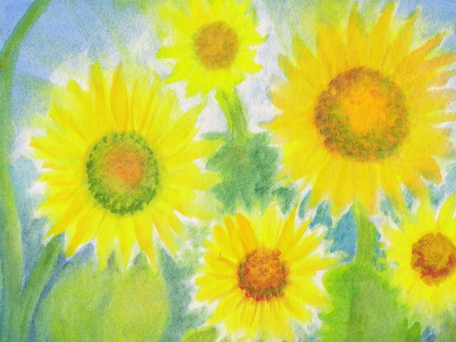 077: Sonnenblumen