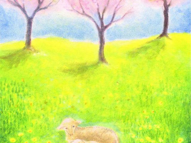085: Frühlingsbirken, Schafe