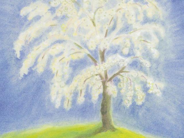082: Blühender Obstbaum